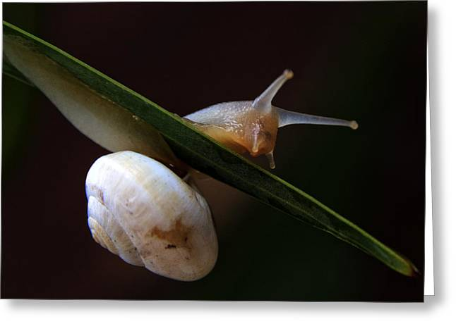 Slip Greeting Cards - Snail Greeting Card by Stylianos Kleanthous