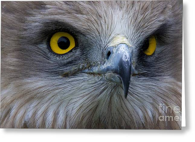 Faunal Greeting Cards - Snake Eagle 2 Greeting Card by Heiko Koehrer-Wagner