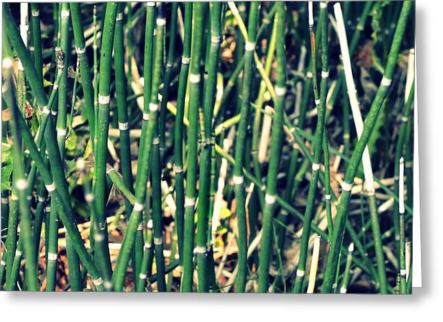 Sand Patterns Greeting Cards - Snake Grass on the Beach Greeting Card by Michelle Calkins