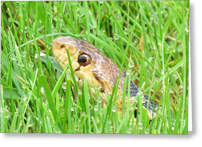 Snakes In Art Greeting Cards - Snake In The Grass Greeting Card by John Irons