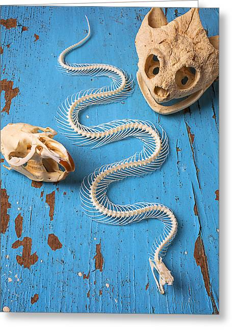 Fangs Greeting Cards - Snake skeleton and animal skulls Greeting Card by Garry Gay