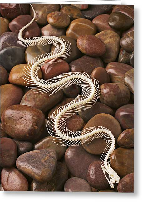 Fangs Greeting Cards - Snake skeleton  Greeting Card by Garry Gay