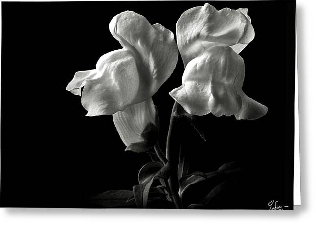 Flower Photos Greeting Cards - Snapdragons in Black and White Greeting Card by Endre Balogh