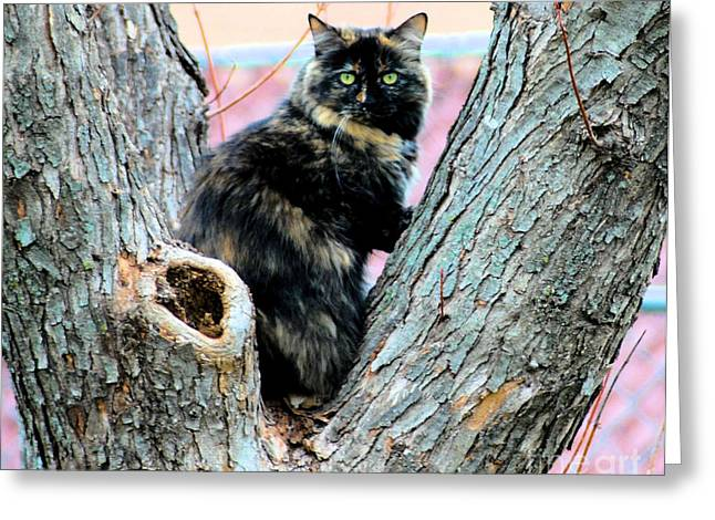 Photo Of Calico Cat Greeting Cards - Snickers Caught in the Act Greeting Card by Cheryl Poland