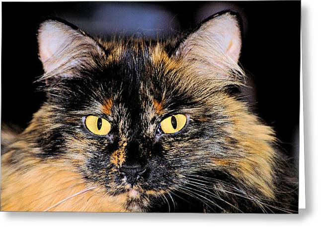 Photos Of Cats Greeting Cards - Snickers Greeting Card by Cheryl Poland