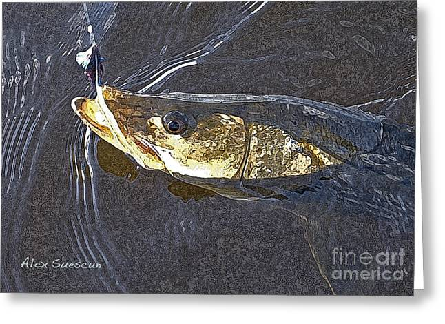 Tarpon Drawings Greeting Cards - Snook Slider Greeting Card by Alex Suescun