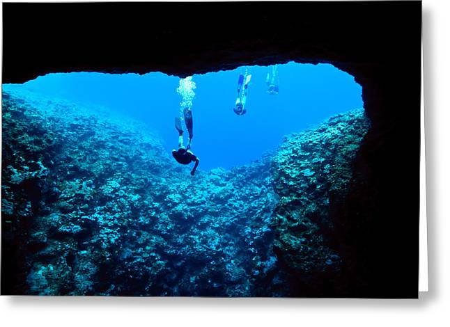 Decent Greeting Cards - Snorkelers Tentatively Examine Greeting Card by Jason Edwards