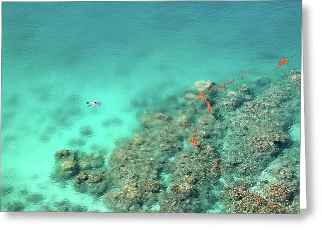 Tropical Oceans Greeting Cards - Snorkeling at Honolua bay Greeting Card by Pierre Leclerc Photography