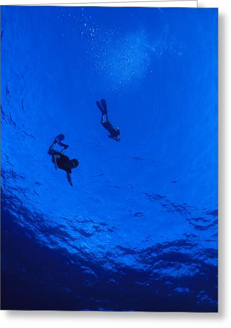 Human Image Greeting Cards - Snorklers Diving Into A Deep Blue Greeting Card by Jason Edwards