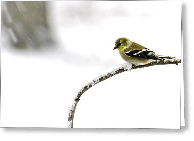 Wild Orchards Greeting Cards - Snow Bird in the storm Greeting Card by LeeAnn McLaneGoetz McLaneGoetzStudioLLCcom