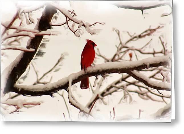 Snow Cardinal Greeting Card by Janet Pugh