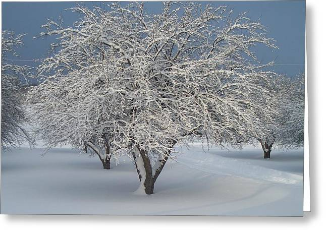 Snow-covered Apple Tree Greeting Card by Erica Carlson