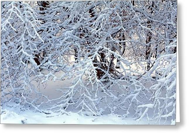 Snow-covered Landscape Greeting Cards - Snow covered branches Greeting Card by Intensivelight