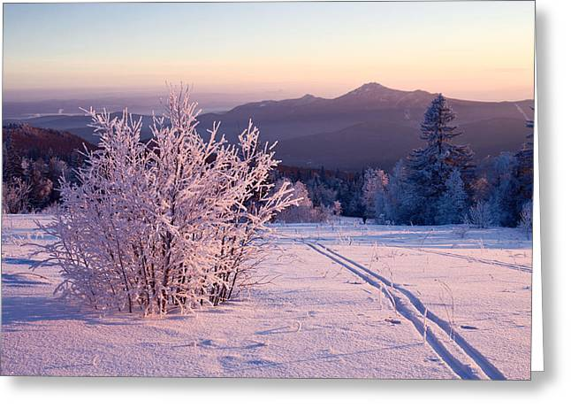 Snow-covered Landscape Greeting Cards - Snow-covered bush and ski-track Greeting Card by Evgeny Prokofyev