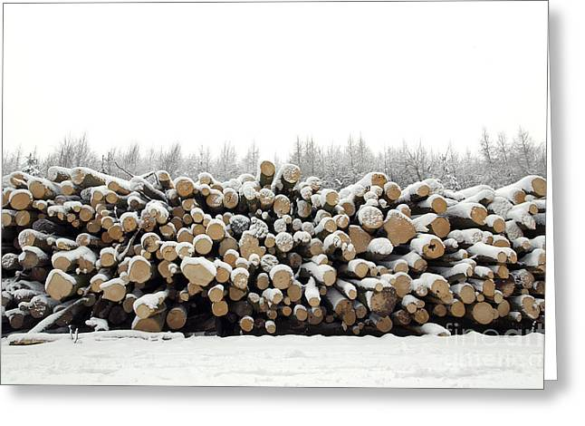 Snow Scene Landscape Greeting Cards - Snow covered log pile Greeting Card by Richard Thomas
