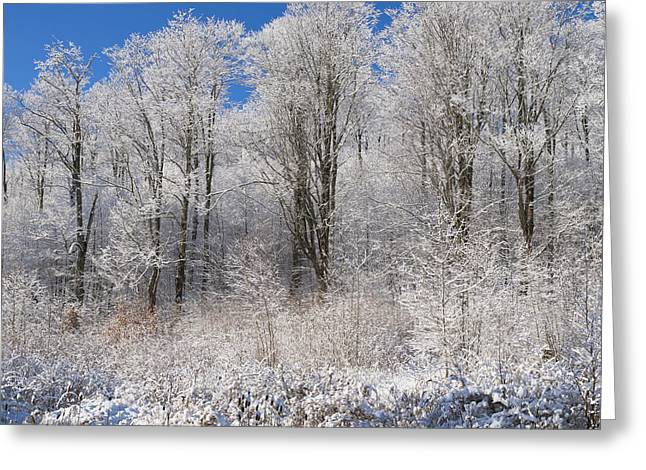 Snow-covered Landscape Greeting Cards - Snow Covered Maple Trees Iron Hill Greeting Card by David Chapman