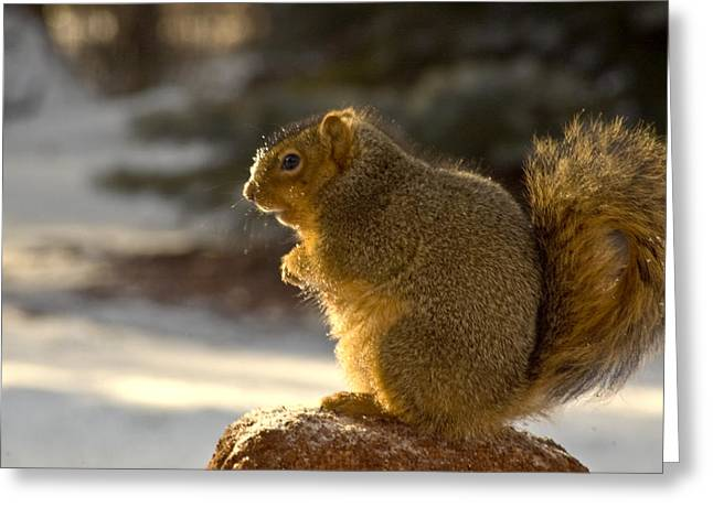 Squirrel Greeting Cards - Snow covered Squirrel Greeting Card by LeeAnn McLaneGoetz McLaneGoetzStudioLLCcom