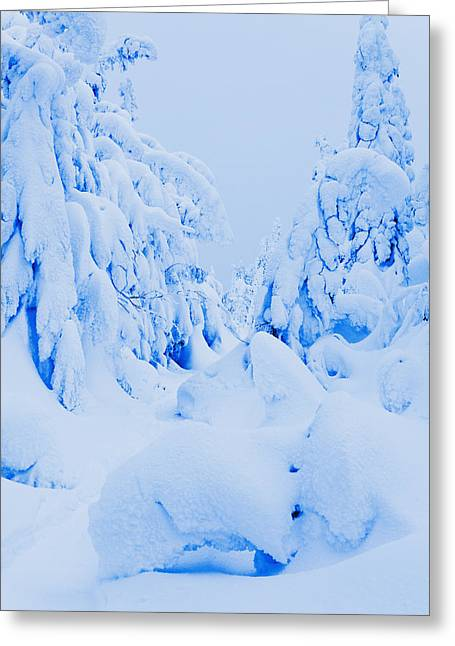 Vallee Greeting Cards - Snow-covered To Vallee Des Fantomes Greeting Card by Yves Marcoux
