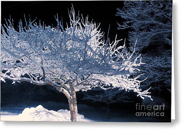Beautiful Scenery Photographs Greeting Cards - Snow-covered Tree At Night Greeting Card by HD Connelly