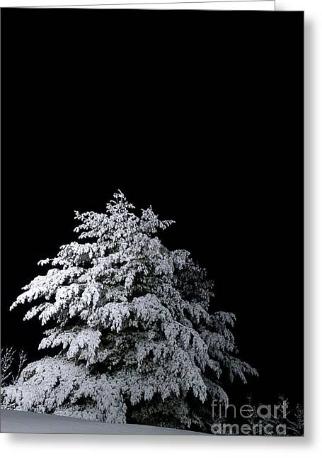 Sillouette Greeting Cards - Snow-covered Tree Greeting Card by HD Connelly