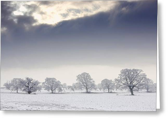 Snow Covered Trees And Field Greeting Card by John Short