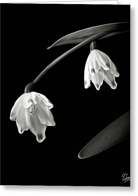 Snow Drops Greeting Cards - Snow Drops in Black and White Greeting Card by Endre Balogh