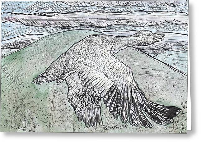 Geese Drawings Greeting Cards - Snow Goose in Flight using Quill Pens and Ink with Watercolor Washes. Greeting Card by John A Fowler