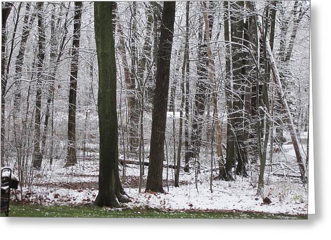 Snow-covered Landscape Greeting Cards - Snow in the Woods Greeting Card by Kathy Sheeran