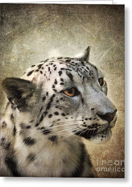Wildcats Greeting Cards - Snow Leopard Portrait Greeting Card by Jai Johnson