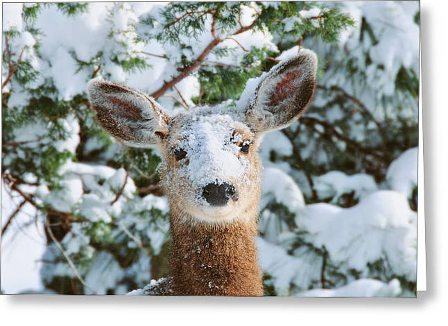 Does. Winter Greeting Cards - Snow on Doe Greeting Card by Rich Beer