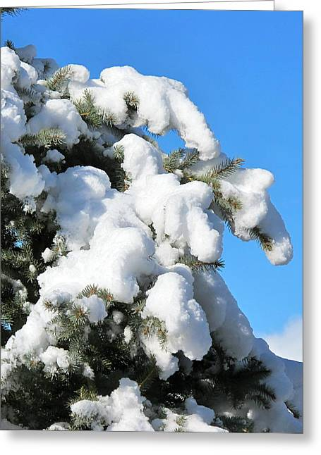 Leaden Sky Greeting Cards - Snow on Pine Pack Greeting Card by Phyllis Kaltenbach