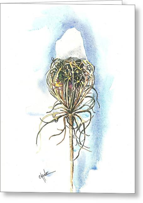 Queen Annes Lace Greeting Cards - Snow on Queen Anne Greeting Card by Christine Camp