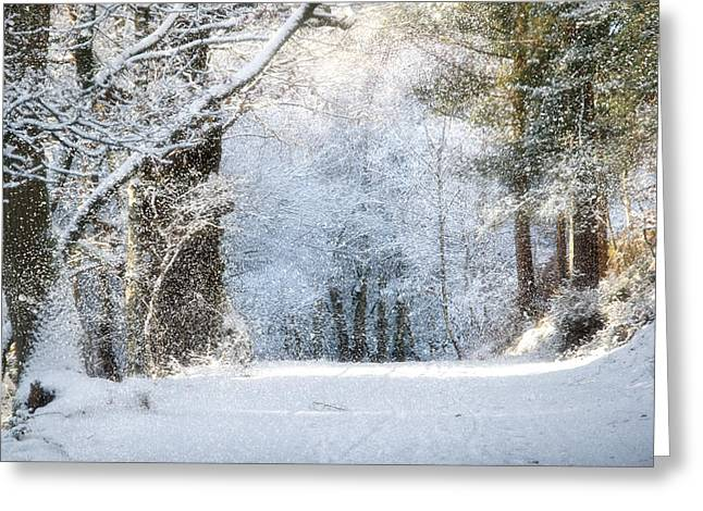 Cannock Chase Greeting Cards - Snow on the Chase Greeting Card by Ann Garrett