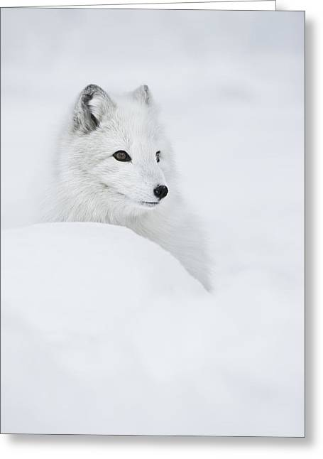 Arctic Circle Greeting Cards - Snow Queen Greeting Card by Andy Astbury