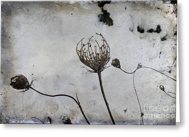 Flypaper Edge Texture. Greeting Cards - Snow Seeds Greeting Card by Paul Grand