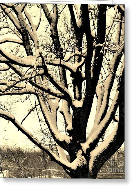 Photo Impressionist Greeting Cards - Snow Sitting On Top The Tree Greeting Card by Marsha Heiken