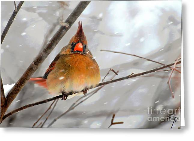 Cardinal In Snow Greeting Cards - Snow Surprise Greeting Card by Lois Bryan