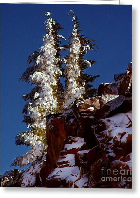 Snow On Trees Greeting Cards - Snow Tipped Trees  Greeting Card by Peter Piatt