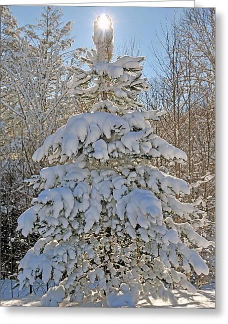 Xmas Tree Greeting Cards - Snow Tree of Light Greeting Card by Alan Lenk