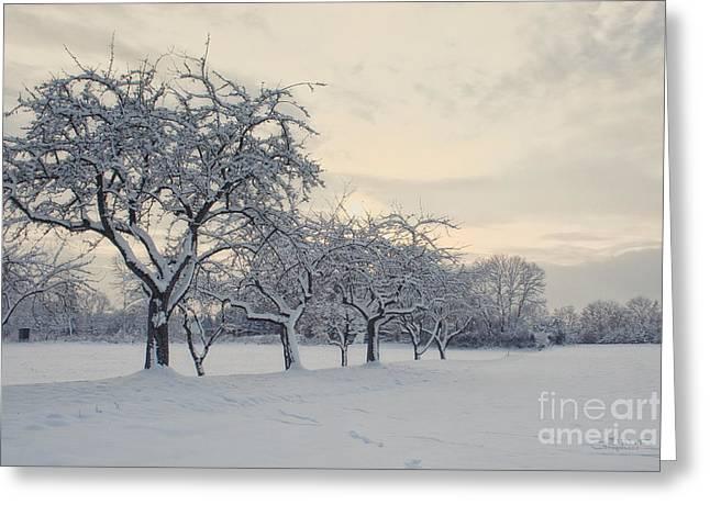 Winter Photos Greeting Cards - Snow Trees Greeting Card by Jutta Maria Pusl