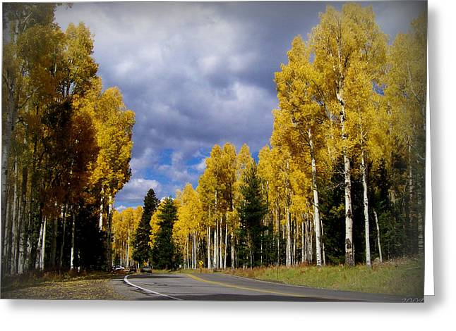 Snowbowl Greeting Cards - Snowbowl Road Aspens Greeting Card by Aaron Burrows
