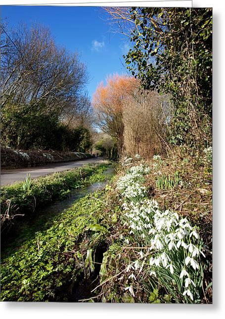 Snowdrop Lane Greeting Card by Kris Dutson