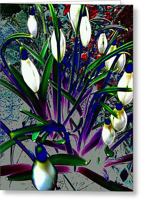 Altered Photograph Greeting Cards - Snowdrops in Abstract  Greeting Card by Beth Akerman