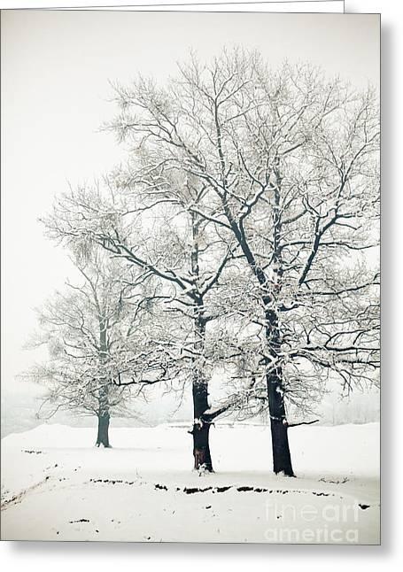 Snowy Day Greeting Cards - Snowed Greeting Card by Gabriela Insuratelu