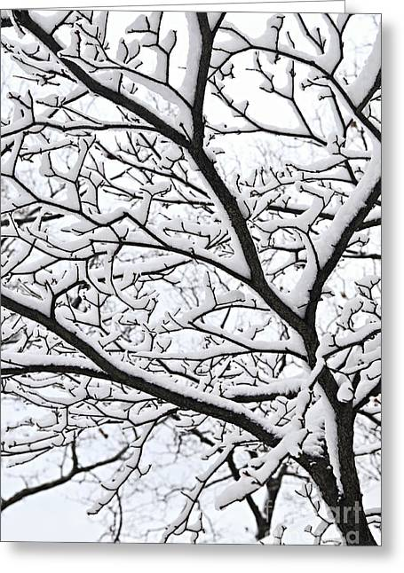 Winter Park Greeting Cards - Snowy branch Greeting Card by Elena Elisseeva