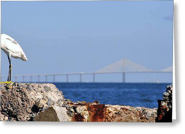 Panoramic Ocean Greeting Cards - Snowy Egret and Sunshine Skyway Bridge Greeting Card by David Lee Thompson