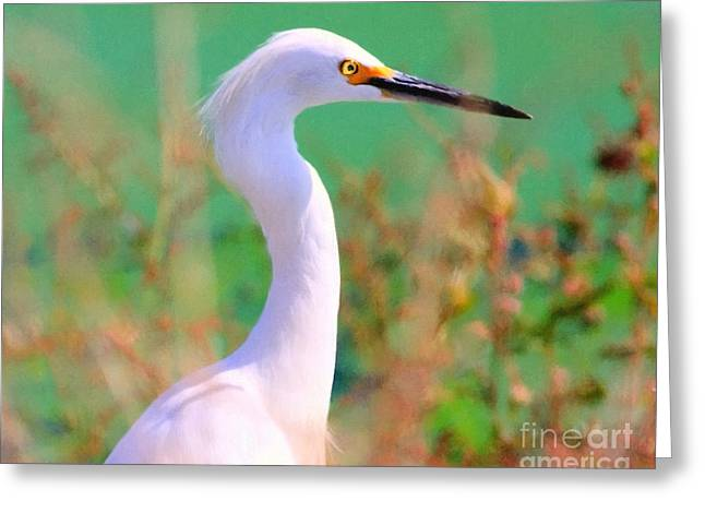 Water Fowl Greeting Cards - Snowy Egret . Painterly Greeting Card by Wingsdomain Art and Photography