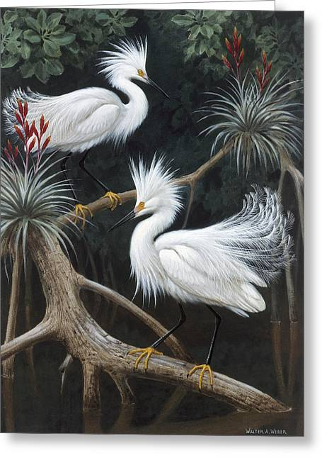 Snowy Egret Greeting Cards - Snowy Egrets Display Their Courtship Greeting Card by Walter A. Weber