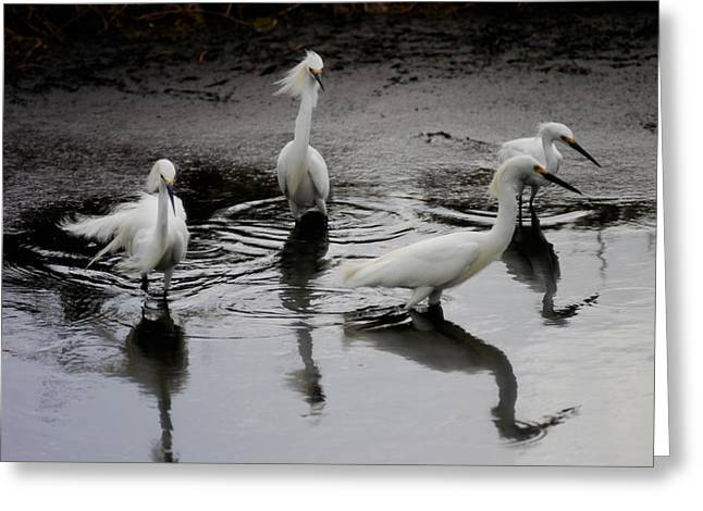 Snowy Egret Greeting Cards - Snowy Egrets I Greeting Card by Jane Melgaard