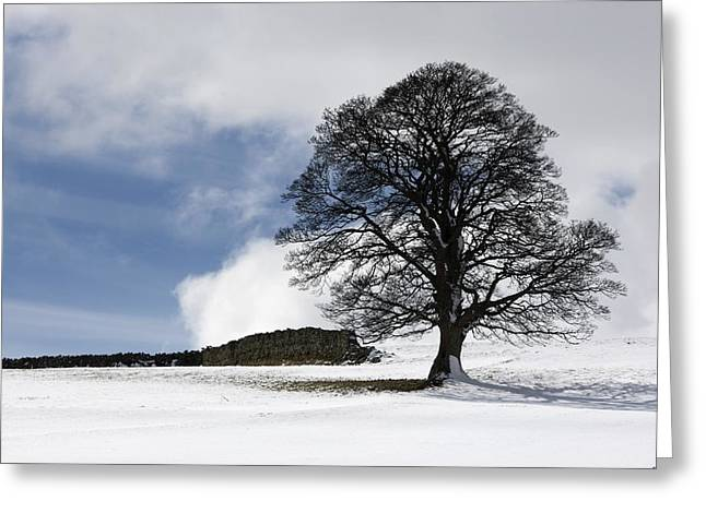 Snowy Field And Tree Greeting Card by John Short